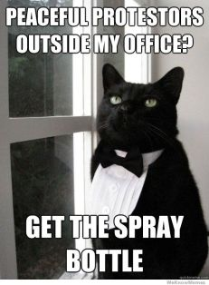 one-percent-cat-get-the-spray-bottle