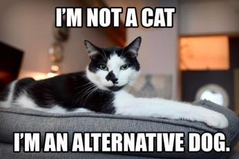 im-not-a-cat