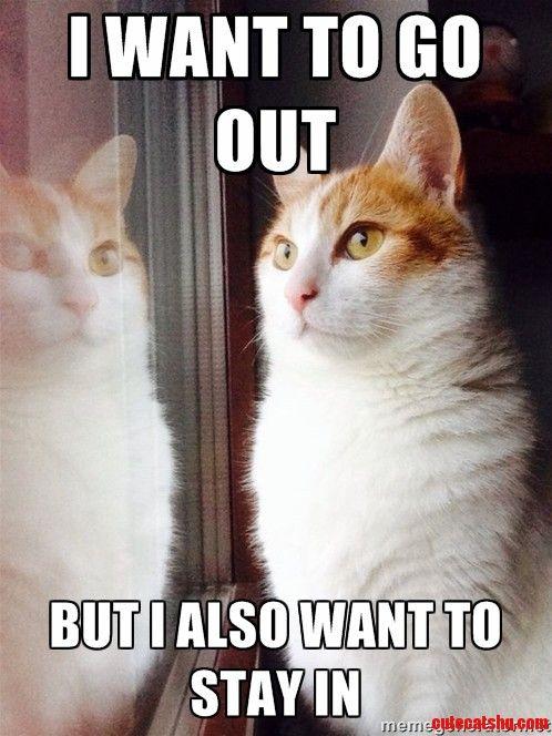 Top 30 Funny Cat Memes Humor Quotes Emma Sabzalieva
