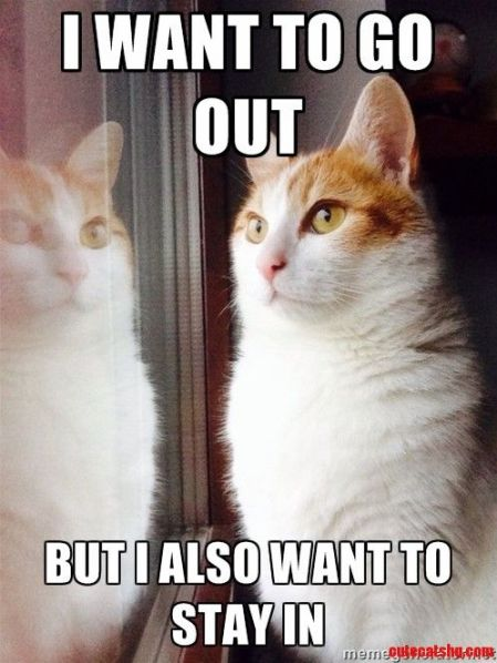 Top-30-Funny-Cat-Memes-Humor-quotes