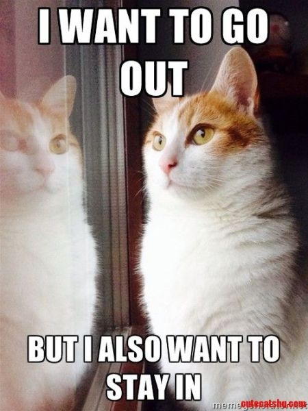 Top-30-Funny-Cat-Memes-Humor-quotes