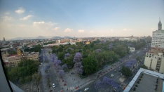 View from the 15th floor of the beautiful jacarandas in Alameda Central