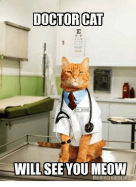 doctor-cat-will-see-you-meow-5308602