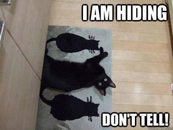 I-am-hiding---cat-meme