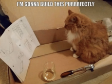 im-gonna-build-this-purrrfectly