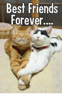best-friends-forever-5476274