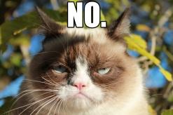 No - grumpy cat
