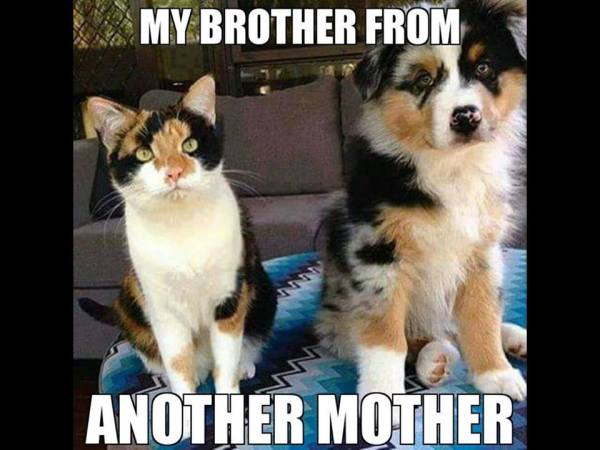 brother-from-another-mother
