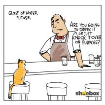 cat-walks-into-a-bar-157999