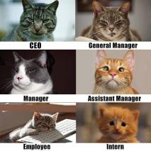 cat+company