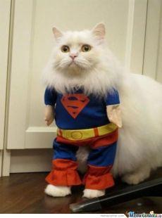 super-cat_o_593743