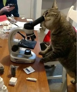 cat-doing-science