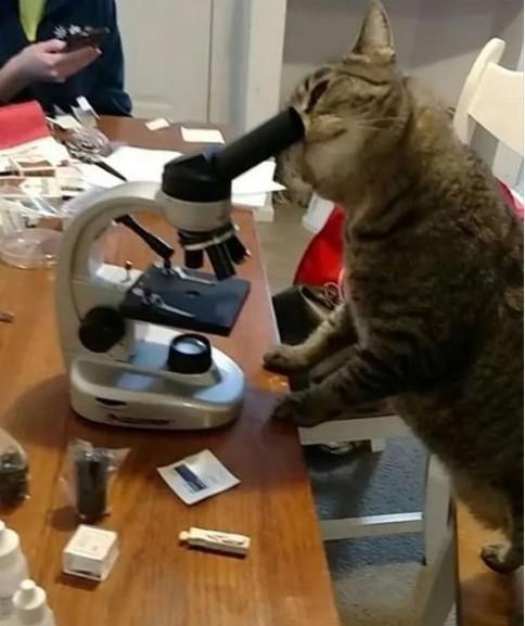 cat-doing-science