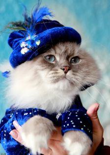 Kyrgyzstan cat show