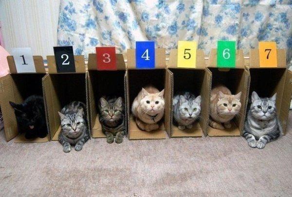 Cat_ranking