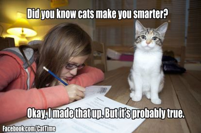 cats make you smarter