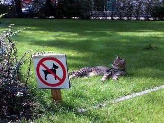 cat breaking law