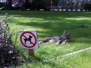 cat breaking law