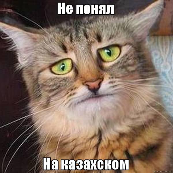 cat не понял на казахском