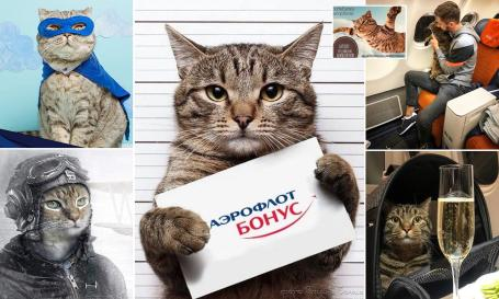 Fat cat Victor Aeroflot